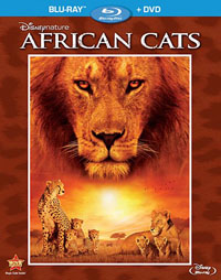 africancatsbd