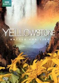 yellowstonedvd